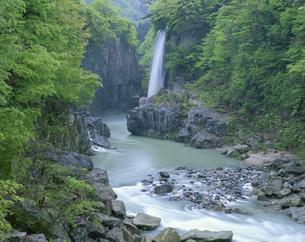手取渓谷 錦ヶ滝 吉野谷村5月の写真素材 [FYI03314610]