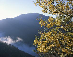 秋の剣山 東祖谷山村の写真素材 [FYI03314654]