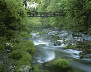 奥祖谷かずら橋 東祖谷山村の写真素材 [FYI03314657]