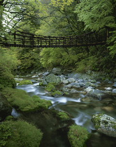 奥祖谷かずら橋 東祖谷山村の写真素材 [FYI03314658]