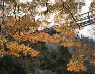 秋の奥祖谷かずら橋 東祖谷山村の写真素材 [FYI03314660]