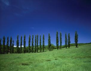 草原とポプラ 旭川 6月 北海道の写真素材 [FYI03314776]