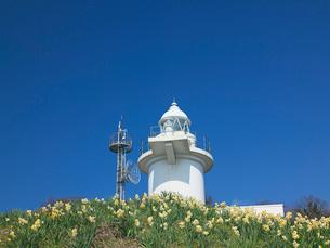 スイセンと六島灯台の写真素材 [FYI03314868]