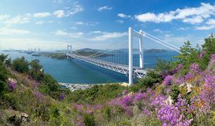 ツツジ咲く鷲羽山より望む瀬戸大橋の写真素材 [FYI03314900]
