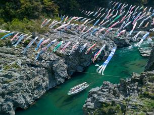 大歩危峡の観光船と鯉のぼりの写真素材 [FYI03314915]