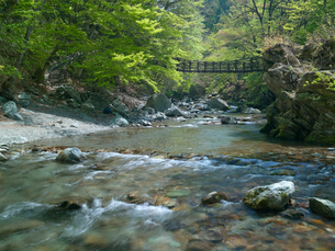 奥祖谷かずら橋の写真素材 [FYI03314917]
