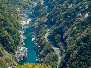 山桜の咲く小歩危峡の写真素材 [FYI03314921]