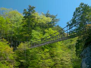 奥祖谷かずら橋の写真素材 [FYI03314930]