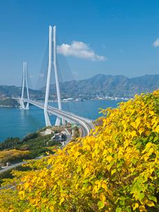 紅葉としまなみ海道の多々羅大橋の写真素材 [FYI03315042]