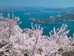 桜の瀬戸内海と因島大橋の写真素材 [FYI03315057]