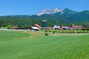 蒜山高原の牧場と大山の写真素材 [FYI03315109]