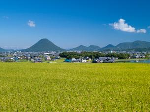 稲穂と讃岐富士の写真素材 [FYI03315190]