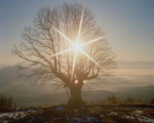 妙高々原の樹1本の写真素材 [FYI03315763]
