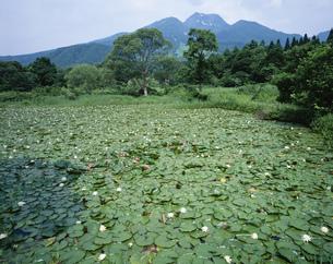 妙高山といもり池の写真素材 [FYI03315774]
