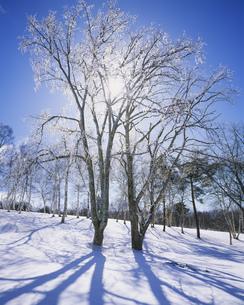 菅平高原の霧氷の写真素材 [FYI03315871]