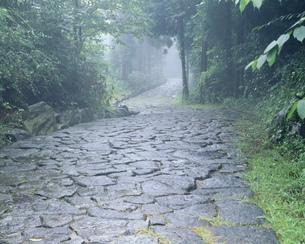 旧中仙道石畳の写真素材 [FYI03316013]