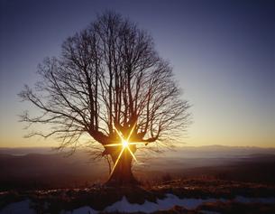 冬の木立に上る太陽 妙高々原の写真素材 [FYI03316181]