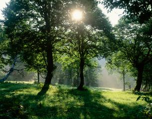 緑の森の木もれ日 妙高高原の写真素材 [FYI03316185]
