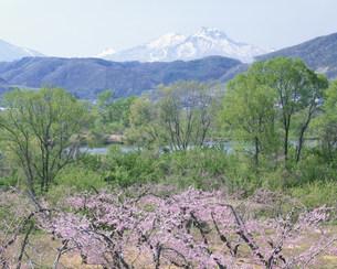 残雪の妙高山と千曲川の写真素材 [FYI03316337]