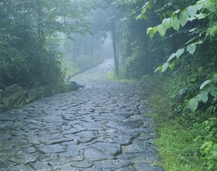 石畳の道の写真素材 [FYI03316531]