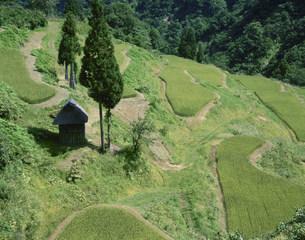 松之山の写真素材 [FYI03316680]