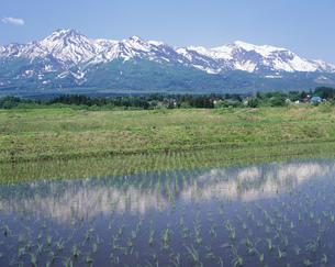 初夏の妙高山の写真素材 [FYI03316743]
