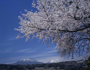 桜と黒姫山と妙高山の写真素材 [FYI03316816]