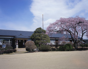 廃校の桜の写真素材 [FYI03316844]