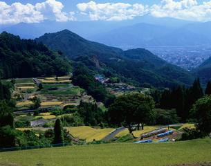 郊外から望む長野市と棚田の写真素材 [FYI03316957]