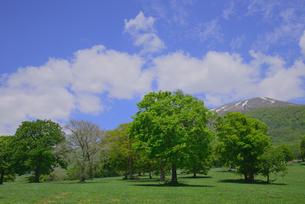 新緑の高原の写真素材 [FYI03317298]