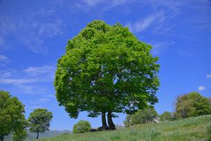 高原の新緑の写真素材 [FYI03317309]