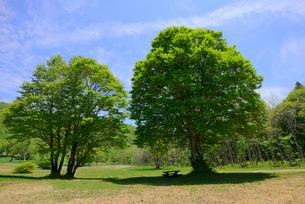 新緑の高原の樹の写真素材 [FYI03317317]