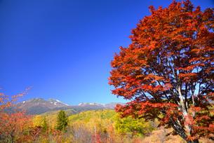 乗鞍岳と紅葉の大楓の写真素材 [FYI03317378]