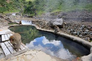 スノーモンキーの露天風呂の写真素材 [FYI03317803]