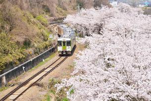 桜とローカル線の写真素材 [FYI03317965]