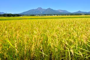 稲田と妙高山の写真素材 [FYI03319057]