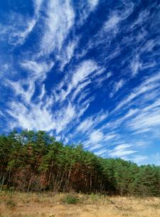 八幡高原 湿原と雲の写真素材 [FYI03319209]