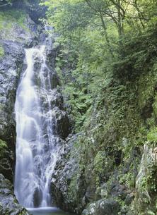 奥匹見峡 大竜頭滝の写真素材 [FYI03319421]
