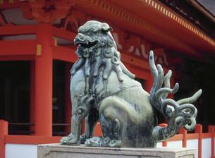 厳島神社 本社祓殿前の狛犬の写真素材 [FYI03319634]