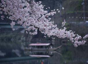 錦帯橋付近の錦川と屋形船の写真素材 [FYI03319639]