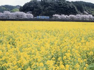 錦川鉄道 南河内駅前の花畑の写真素材 [FYI03319648]