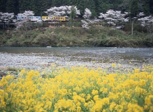錦川鉄道 南桑駅付近の清流と花畑の写真素材 [FYI03319654]