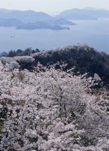 岩城島 積善山の桜の写真素材 [FYI03319659]