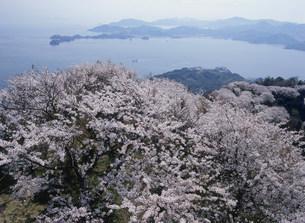 岩城島 積善山の桜の写真素材 [FYI03319660]