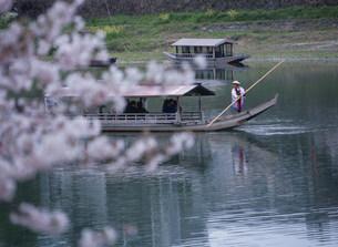 錦帯橋付近の錦川と屋形船の写真素材 [FYI03319680]