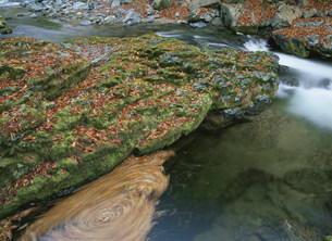 渓流に舞う落ち葉 中津谷渓谷の写真素材 [FYI03319717]
