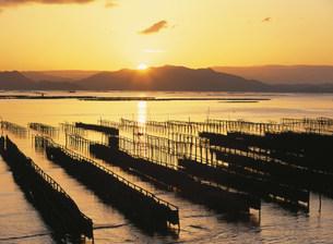 瀬戸内海の朝 かき座の写真素材 [FYI03319721]