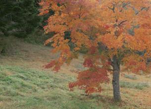 紅葉 もみの木森林公園の写真素材 [FYI03319723]