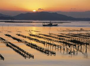 瀬戸内海の朝 かき座の写真素材 [FYI03319724]