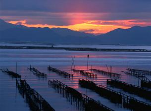 瀬戸内海の朝 かき座の写真素材 [FYI03319730]